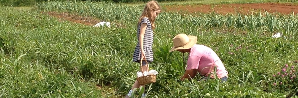 Tips for visiting a you-pick strawberry farm with kids