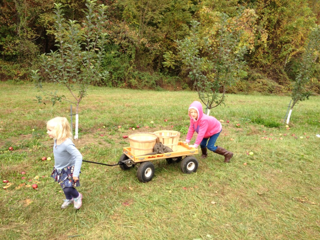 Apple picking and canning….catching up on fall